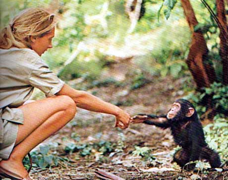 jane goodall  text  images