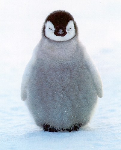 photo of penguin