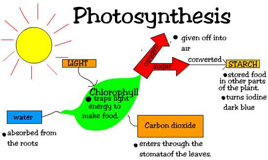 photosynthesis cycle. Photosynthesis Vs. Cellular Respiration (GLOG #1): text, images, music,